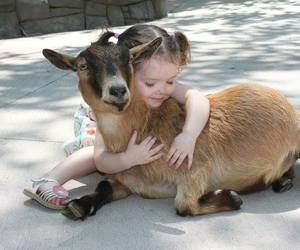 cuddle, girl, and goat image