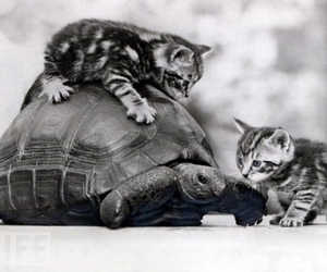turtle, kitten, and cute image
