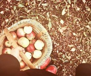 apple, autumn, and basket image