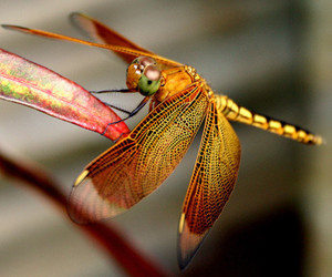beauty, dragonfly, and eyes image