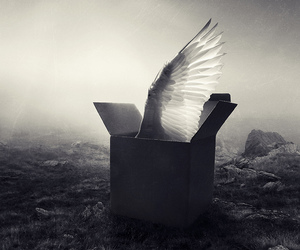 box, angel, and black and white image