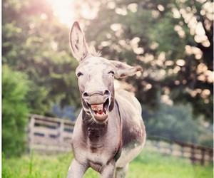 donkey, animal, and funny image