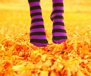 socks and orange image