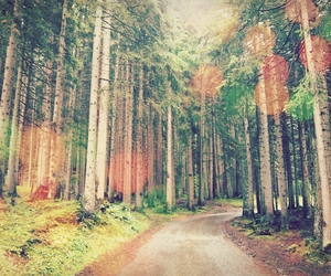 austria, forest, and trees image