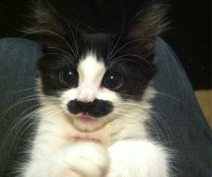 cat, mustache, and kitten image