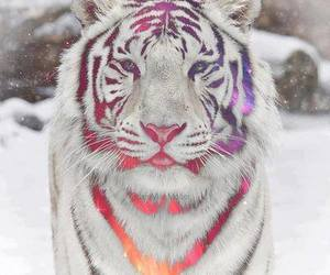 neon, snow, and winter image