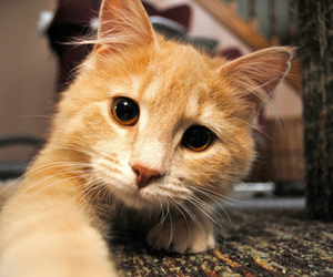 cat, photography, and i love orange kittens image