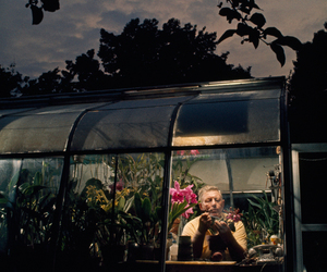 greenhouse, maryland, and orchids image