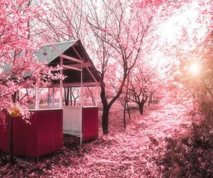 beautiful, pink, and 不言不语都是好风景 image