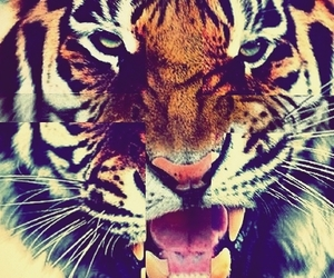 sexy, tiger, and tigers image