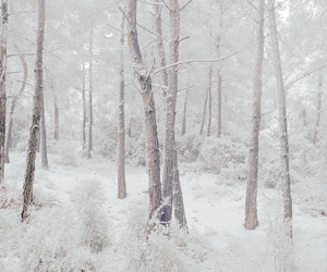 ice, indie, and snow image