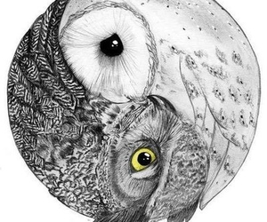owl, black and white, and drawing image