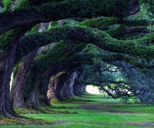 tree, green, and nature image