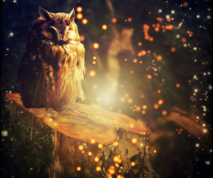 lights, sparkles, and owl image