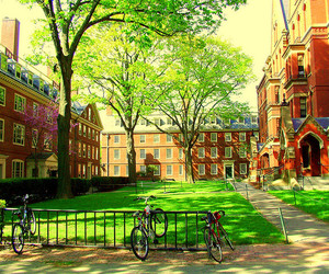 college, harvard, and student image
