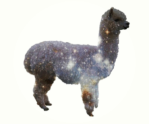 drugs, llama, and space image