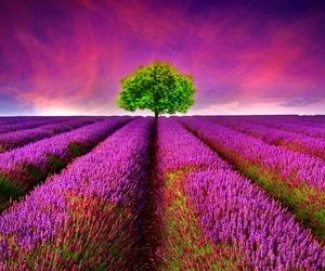 colorful, landscape, and lavender image