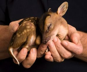 animals, baby deer, and fawn image