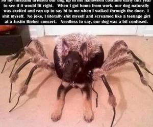 dog, funny, and Halloween image