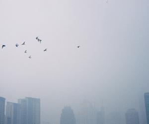 birds, mist, and moon image