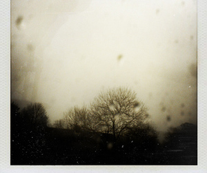 polaroid, rain, and tree image