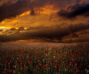 meadows, sky, and red image
