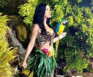 katy perry, roar, and jungle image