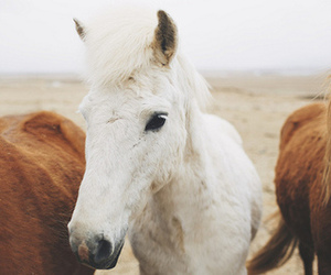 beautiful, horse, and foal image