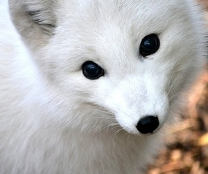 cute and fox image