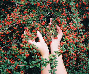 hands, vintage, and nature image