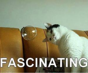 cat, funny, and fascinating image