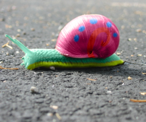gary, snail, and pink image