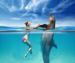 cute, animal, and dolphin image