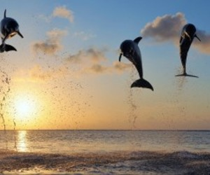 dolphins, love, and gorgeous image