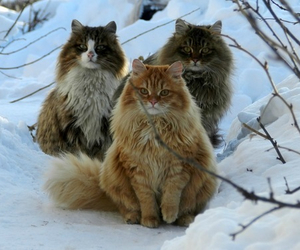 animals, winter, and beauty image