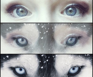 eyes and wolf image