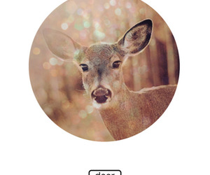 deer, polaroid, and glitter image