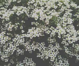 flores, flowers, and hipster image