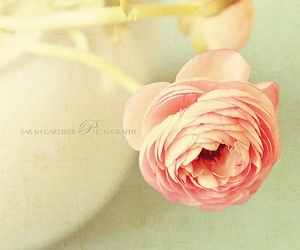 soft image