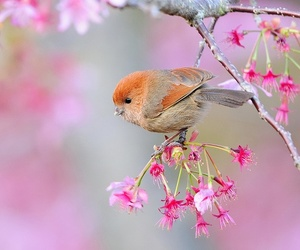 bird, pink, and flowers image