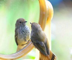 bird and mirror image