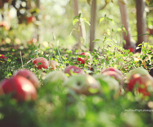 apple, beautiful, and Dream image