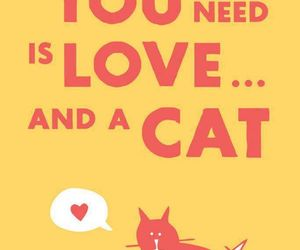 cat, love, and animal image