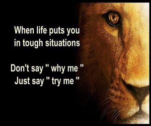quotes, life, and lion image