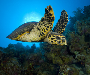 nature, ocean, and turtle image