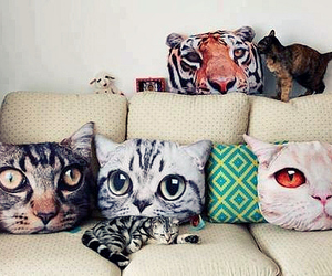 cat, pillow, and animal image