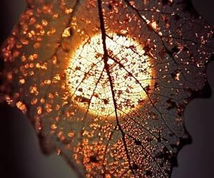autumn, beautiful, and leaf image