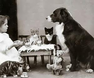 cat, dog, and tea image