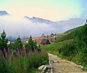 cottage, lavender, and Poland image
