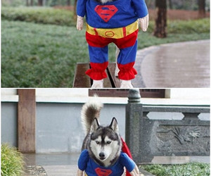 superman, dog, and funny image